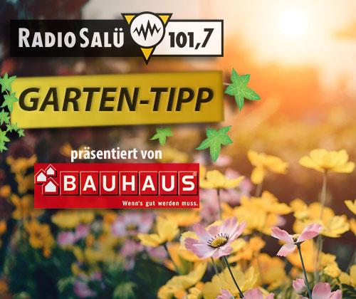 RADIO SALÜ Garten-Tipp